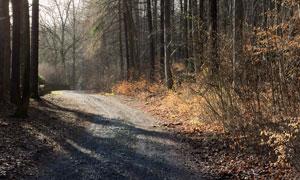 秋冬季节凋敝树林小路摄影高清图片