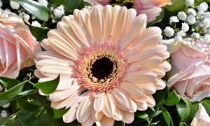一堆鲜花中的菊花特写摄影高清图片