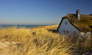 海边丛生杂草中的房子摄影高清图片