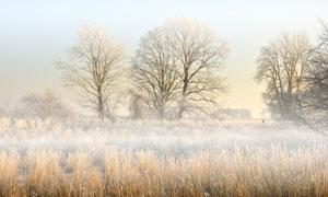 秋冬季节野外荒凉景象摄影高清图片