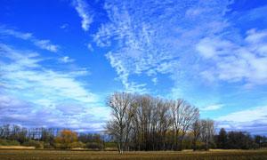 蓝天白云与茂密的树丛摄影五百万彩票图片