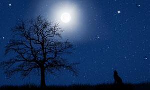 繁星夜空下的大树独狼剪影高清图片