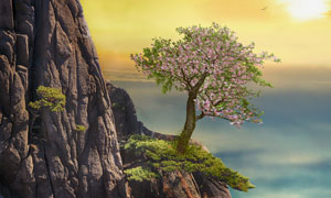 长在山崖上的一棵大树摄影高清图片