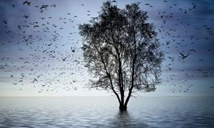 漫天飞鸟与水中的大树摄影高清图片