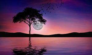 湖畔树木与空中的圆月摄影高清图片