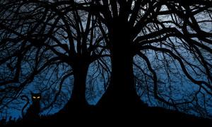 百年大树与树下的黑猫剪影高清图片