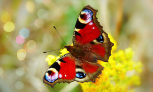 梦幻光斑衬托下的蝴蝶 摄影高清图片