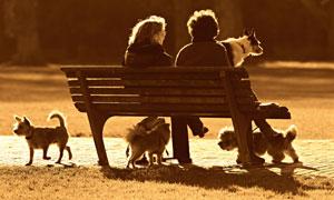 与狗狗和谐相处的人物摄影高清图片