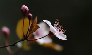 暗部场景春天花朵特写摄影高清图片