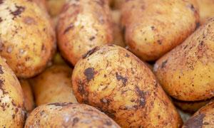 表面还带着泥土的土豆摄影高清图片