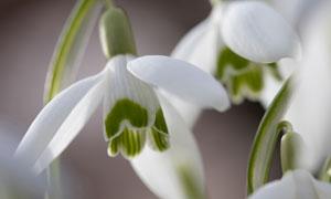 弯着腰的白色花卉植物摄影五百万彩票图片