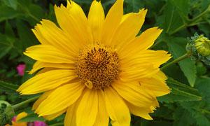 与花丛中争艳的黄菊花摄影高清图片