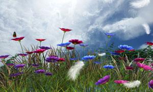 鲜花植物与落下的羽毛摄影高清图片