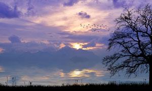 黄昏时天边云彩与树木剪影高清图片