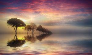 落日余晖水中大树风景摄影高清图片