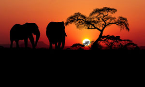 夕阳西下大象树木风光摄影五百万彩票图片
