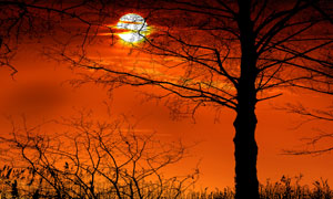 黄昏夕阳晚霞树木风光摄影五百万彩票图片