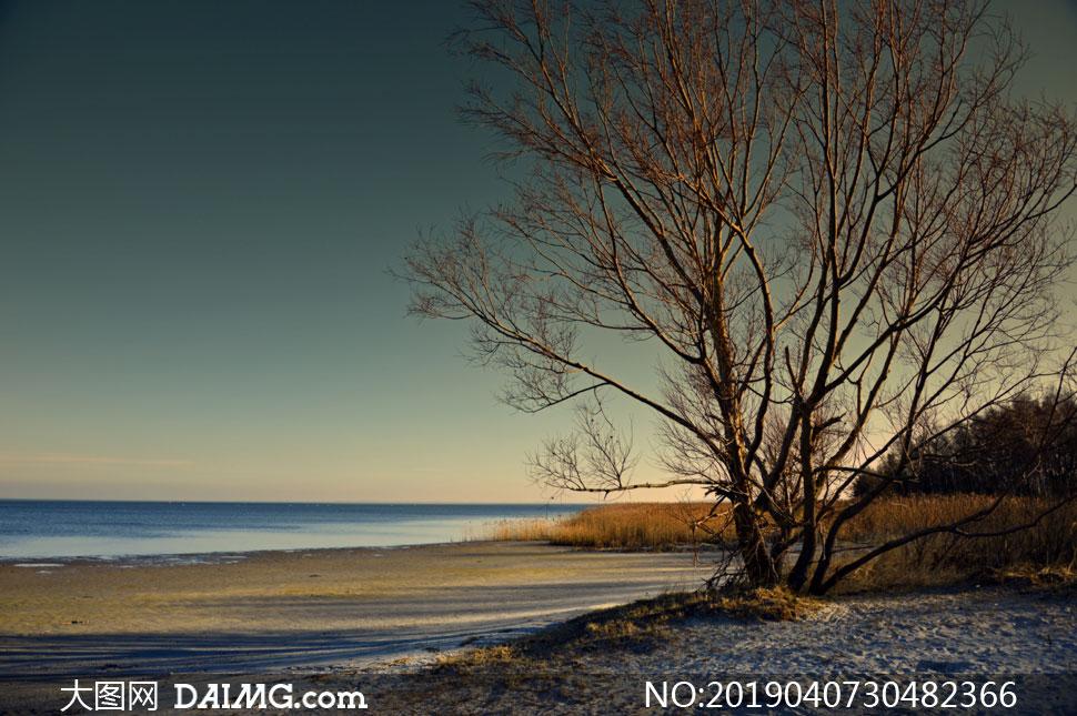 湖边的树木丛自然风光摄影高清图片