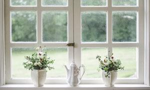 放在窗台上的花盆植物摄影高清图片