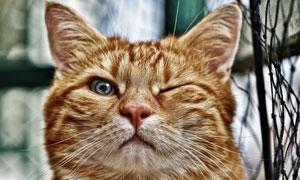 睁一只眼闭一只眼的猫摄影高清图片
