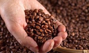 抓一把在手里的咖啡豆摄影高清图片