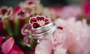 鲜花上的白金戒指特写摄影高清图片