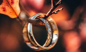 挂在树枝上的结婚戒指摄影高清图片
