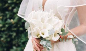 拿在新娘手中的白色花摄影高清图片