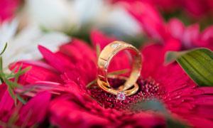 红色菊花上的戒指特写摄影高清图片