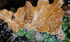 树叶与还没落地的雨滴摄影高清图片