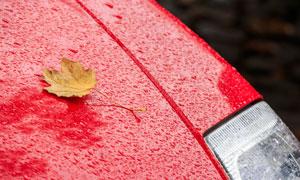雨天落到汽车上的枯叶摄影高清图片