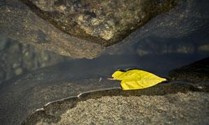 石头缝间溪水中的一片树叶高清图片