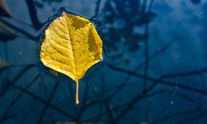 落在水面上的一片树叶摄影高清图片