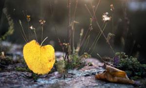 快要落地的一片黄树叶摄影高清图片