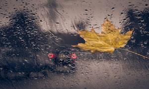 挡风玻璃上的一片叶子摄影高清图片