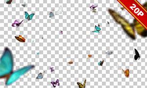 飞舞的蝴蝶装饰等元素前景适用图片