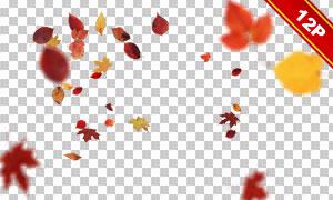 空中飘落下的树叶主题高光适用图片