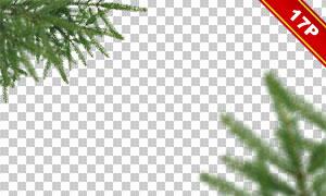 圣誕綠色樹枝邊框裝飾圖層疊加素材