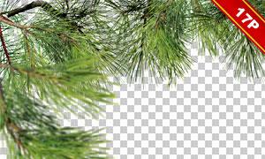 綠色樹枝元素邊框裝飾圖層疊加素材