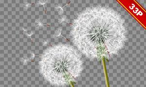 蒲公英植物前景装饰等免抠图片素材