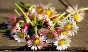 散發著花香的幾只鮮花攝影高清圖片