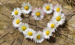 擺成心形的幾朵花特寫攝影高清圖片