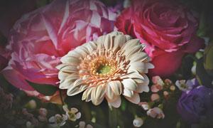 植物园里的玫瑰花植物摄影高清图片