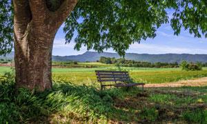 蓝天白云大树下的长椅摄影高清图片