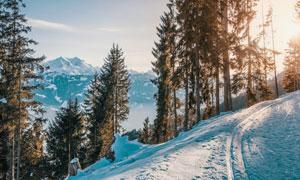 雪山与山坡之上的树木摄影高清图片