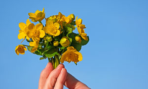 手中的一束黄色花特写摄影高清图片