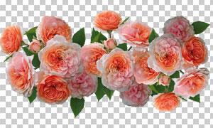 精美绿叶鲜花主题免抠PNG图片素材