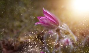 耀眼光线下的红色花卉摄影高清图片
