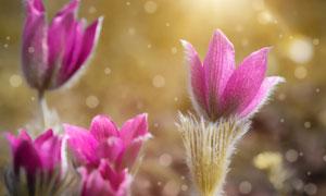 梦幻光斑下的鲜花特写摄影高清图片