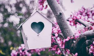 挂在花枝上的心形鸟窝摄影高清图片